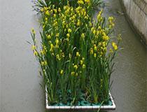 04-挺水植物浮岛.jpg