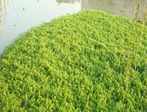 05-浮叶植物浮岛.jpg