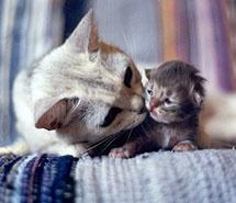 猫咪-母子.jpg