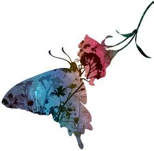 蝴蝶12.jpg
