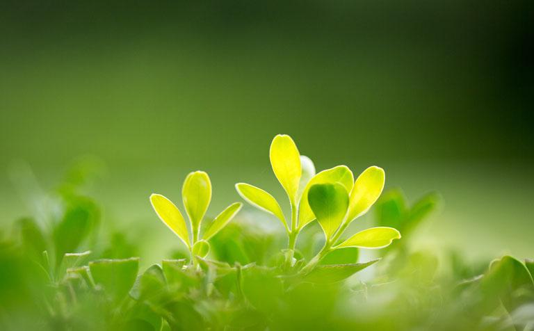 新型绿色会展创新发展课题组:浅析绿色会展在国内发展的前景与困境