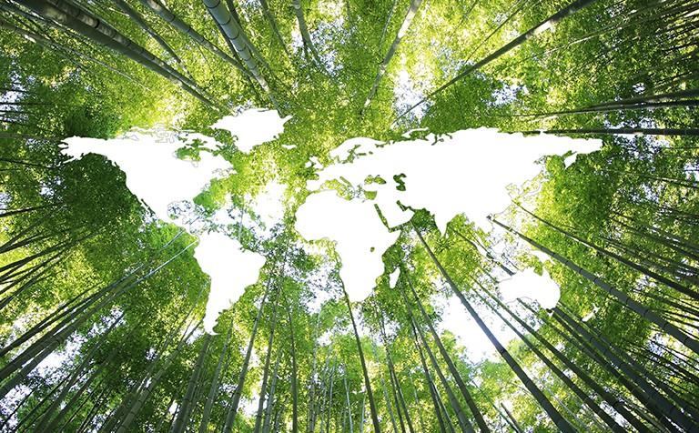 以康养发挥优势 铸造陕南绿色发展的新引擎