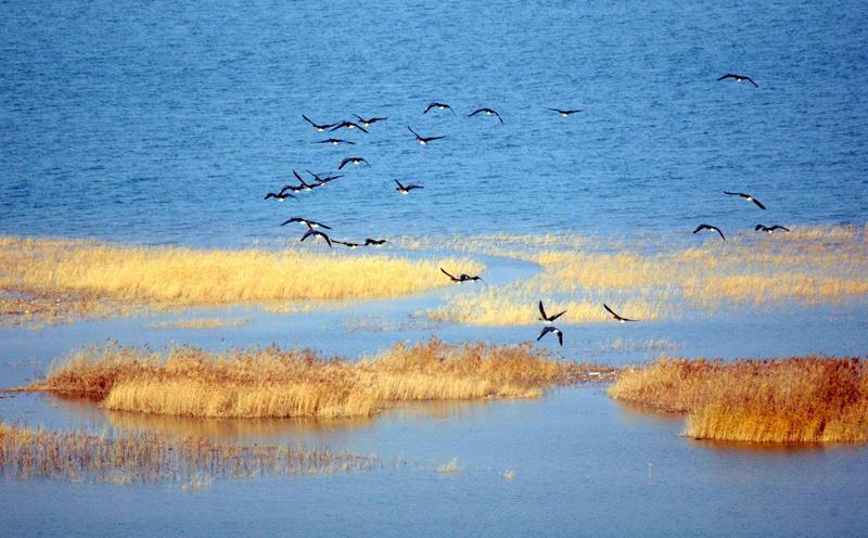 西部绿色生态发展论坛:以习近平生态文明思想引领黄河流域生态文明建设