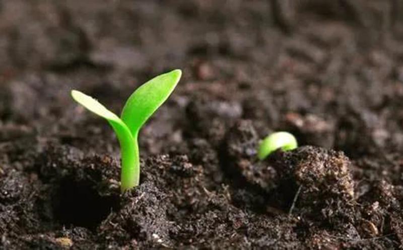 2020西部绿色生态发展论坛:播种现在,播种未来!
