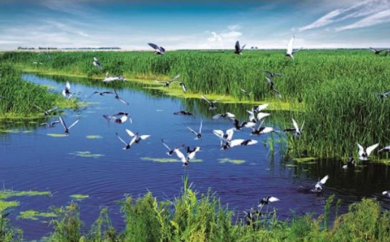 湿地保护从我做起!从我们做起!中国湿地保护大事记