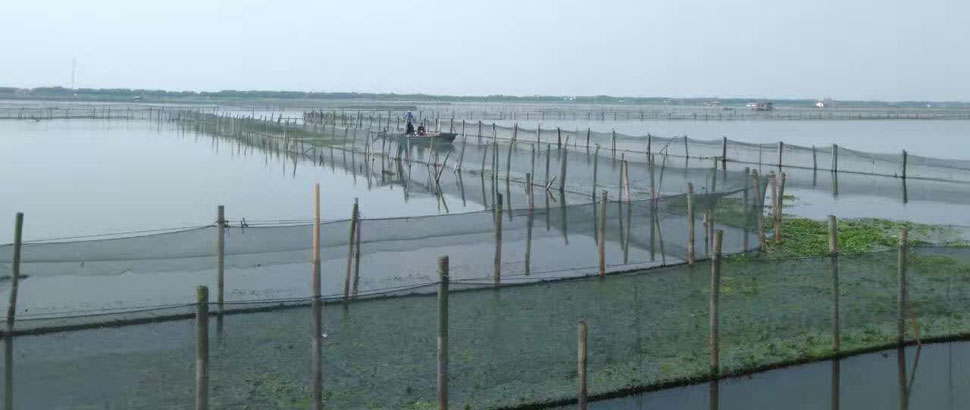 相阳大闸蟹养殖基地