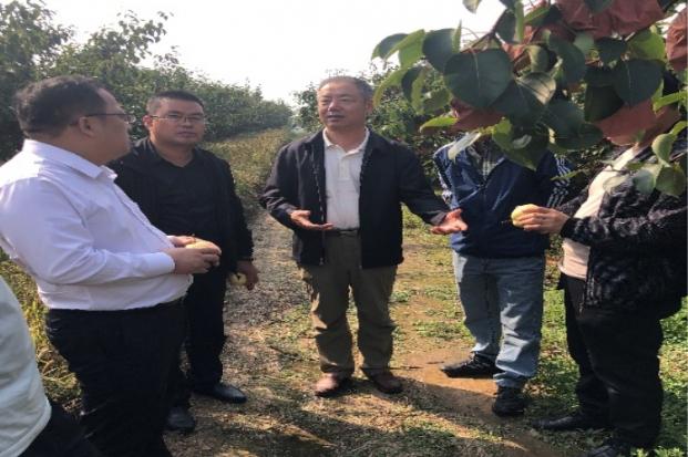 专家组调研山西祁县酥梨与文化旅游产业