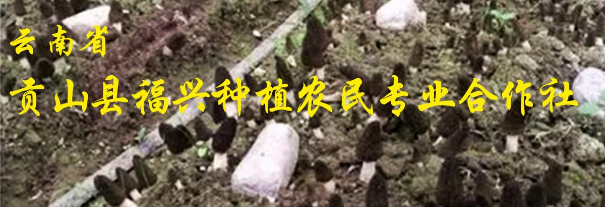贡山县福兴种植农民专业合作社