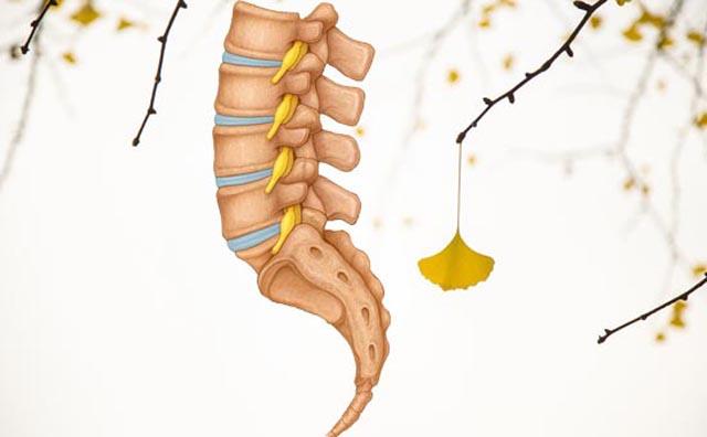 腰椎骶椎模型.jpg