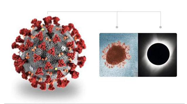 新冠病毒立体模型-美国1.jpg