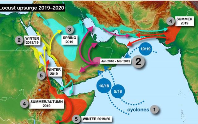 联合国粮农组织发布的沙漠蝗灾趋势图1.jpg