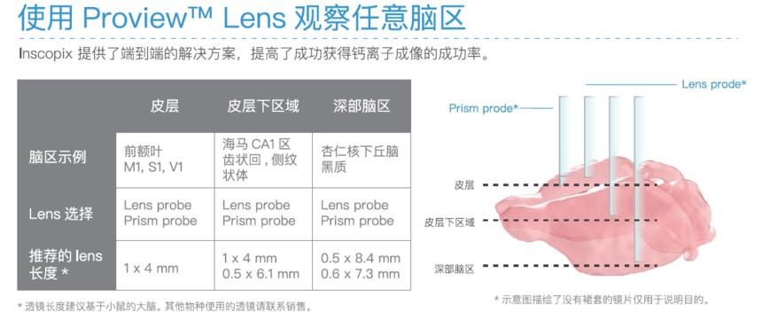 GRIN Lens观察任意脑区