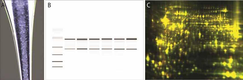 单细胞采集和组织显微切割系统