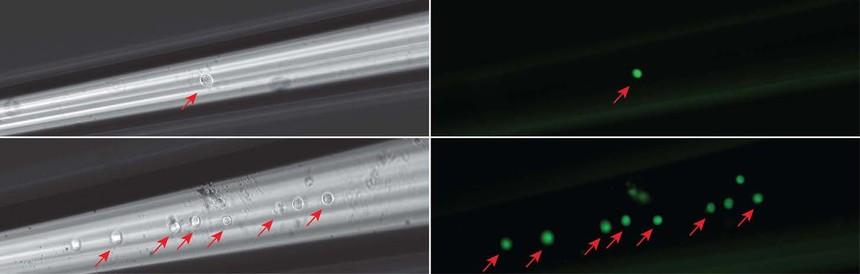 单细胞组织显微采集和释放系统