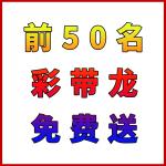 【跨境】城南龙灯杯-免费送