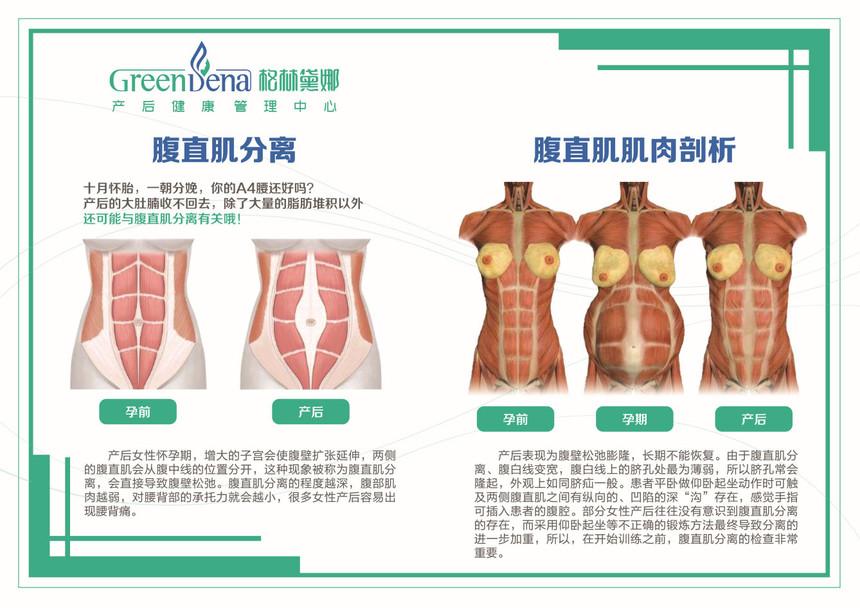 腹直肌小图 (1).jpg