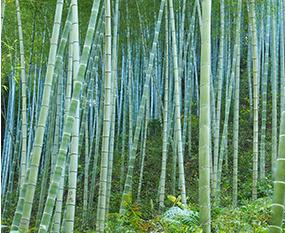1. 圆竹筛选