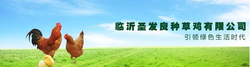 临沂圣发草鸡培育场G3云推广应用心得案例