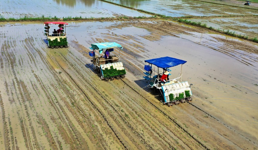 2020年8月2日,安徽省六安市裕安区罗集乡机插秧服务队在云水村帮助群众补插晚稻.jpg