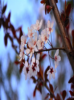 汉中春天花儿