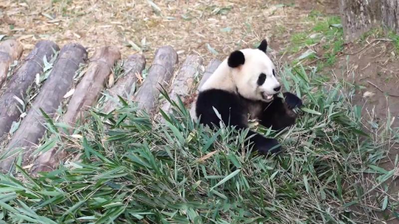 奋斗的一天 ——熊猫奶爸