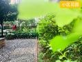 幸福新城小区花园