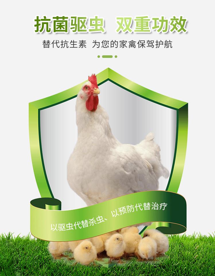 蛋鸡输卵管炎、乐畅桉树精油普、蛋鸡无抗养殖、安全无药残