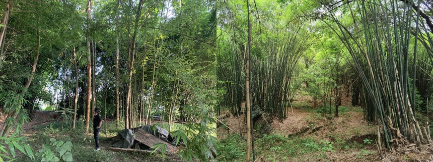 010-bamboo-branch-academy-china-by-archermit-960x360.jpg