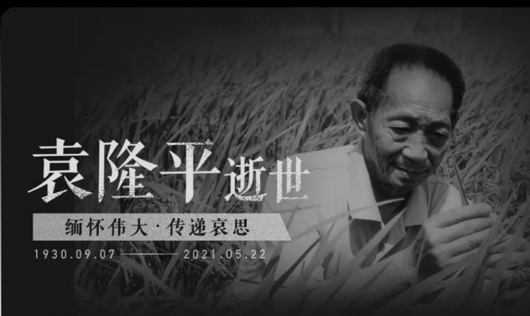 Tribute to Yuan Longping: He is our eternal role model