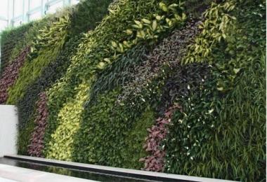 华强北垂直绿化项目