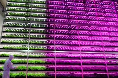 UV LED光源在植物工厂中的应用