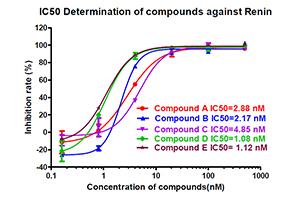 蛋白酶测定