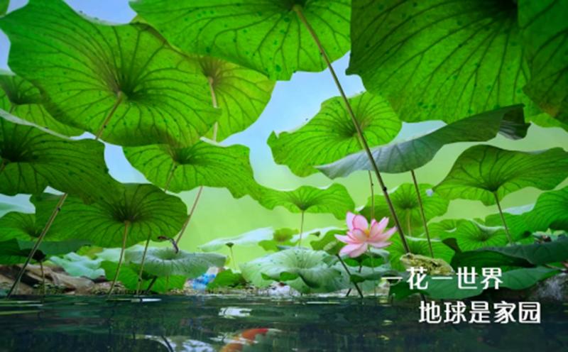 """极度浪漫创意策划·4D沉浸式看花,全国各地的奇珍花卉共同演绎""""花开中国梦"""""""