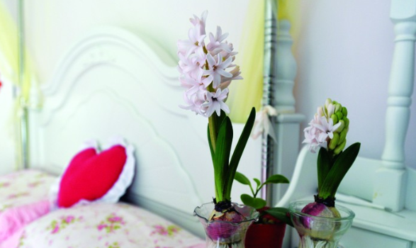 卧室不能养花卉