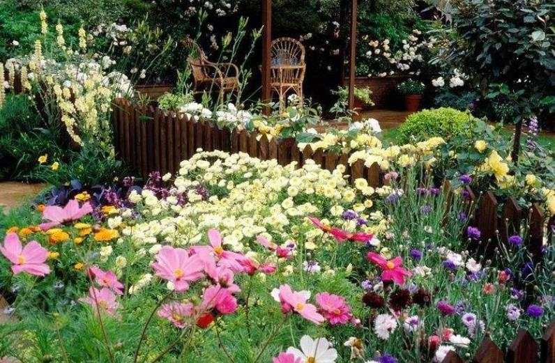 老年人养花的常见的注意事项!你知道吗?