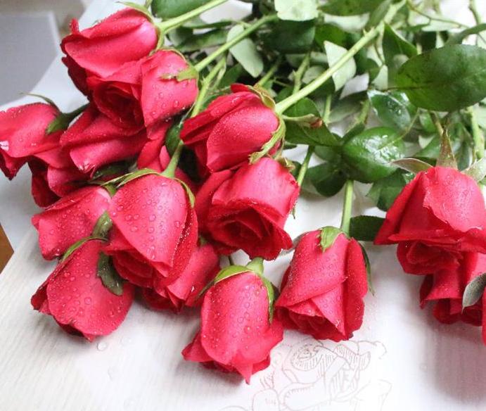 玫瑰花什么时候播种比较好呢?