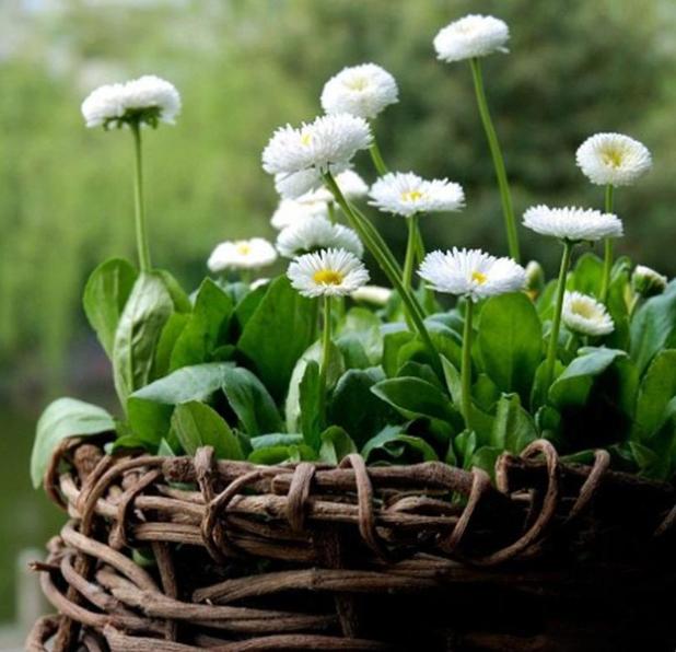 植物的调节作用有哪些?