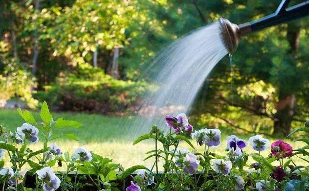 花卉浇灌方式有哪些?