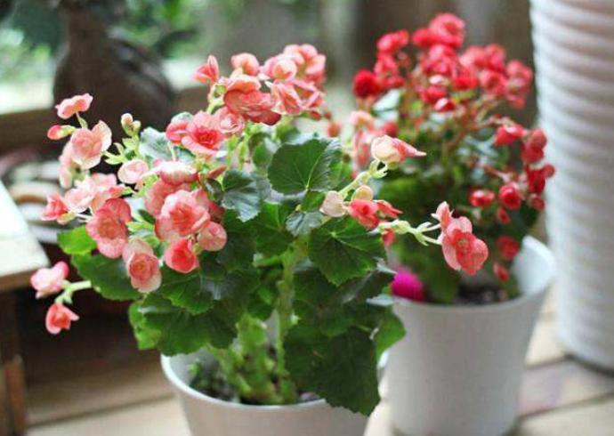 室内花卉的品种选择与养护知识