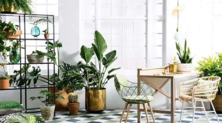 室内绿植租赁