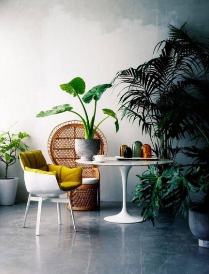 家里植物租摆要注意什么?怎么摆放?