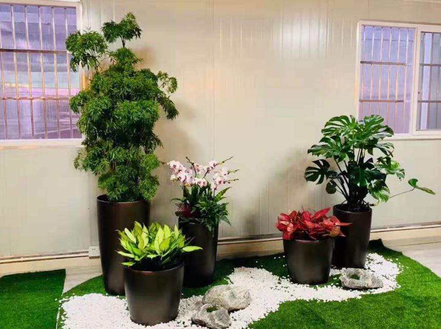 杭州植物出租