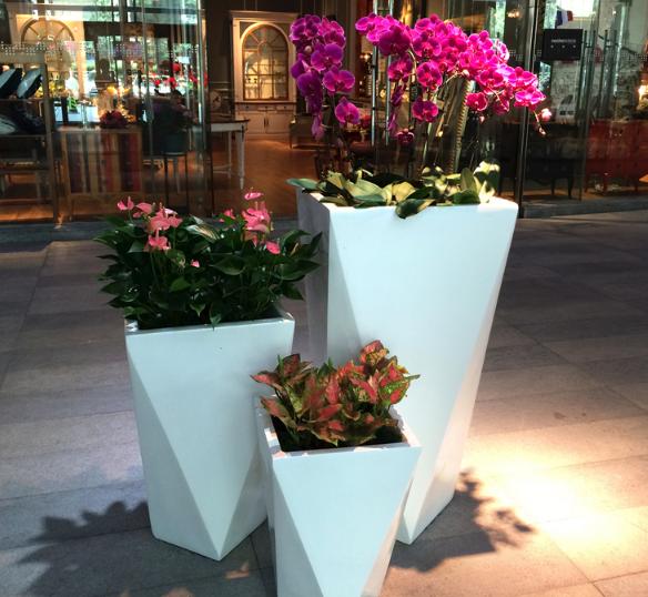 杭州花卉租赁