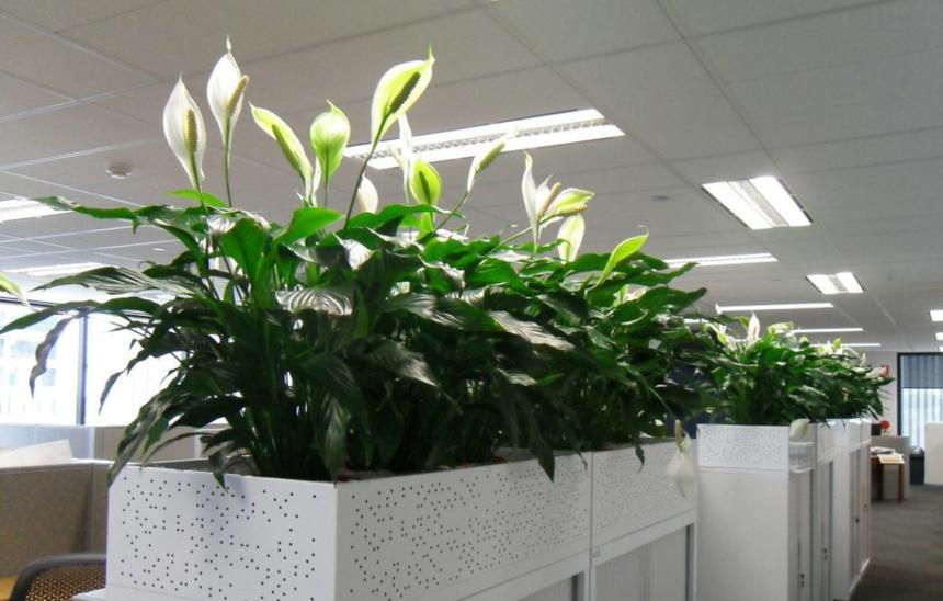 室内花卉租赁养护的十大原则