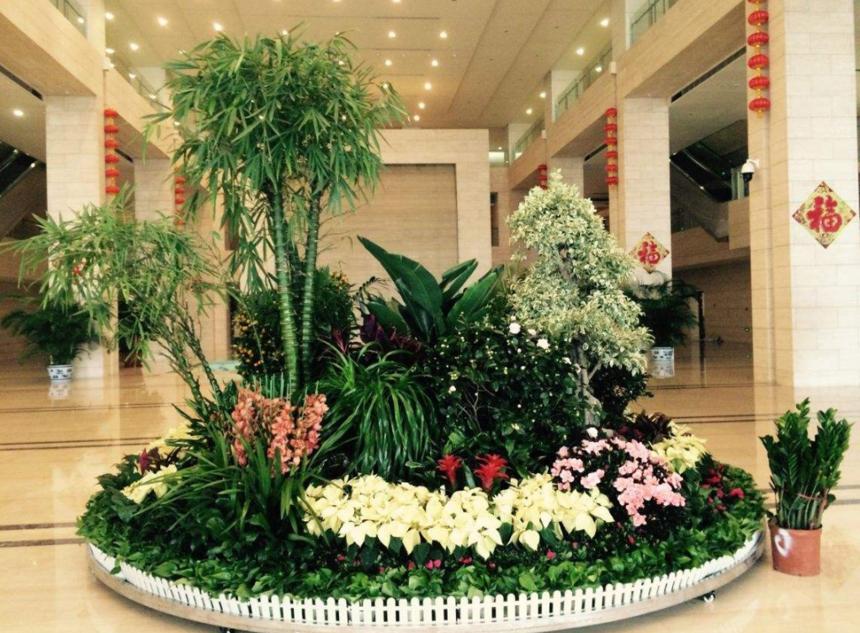 植物怎么样进行租赁能够更合算呢?