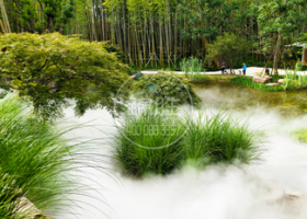 花木植被—清雅自然水雾造景