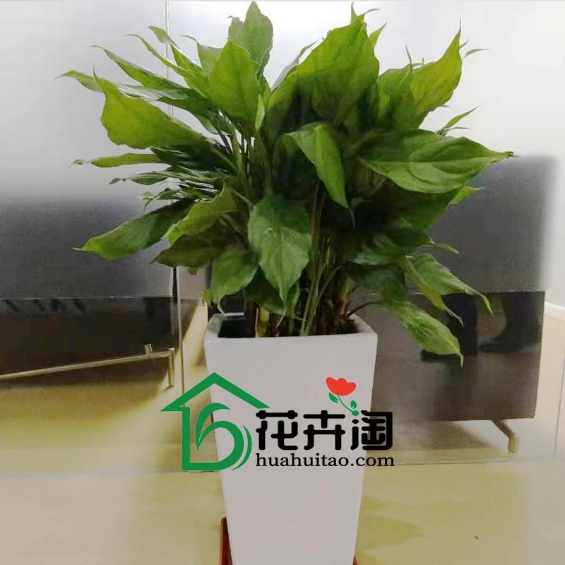 万年青带logo.jpg