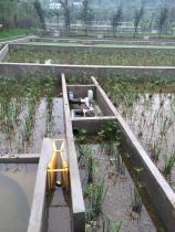 污水处理人工湿地