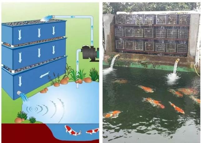 锦鲤鱼池过滤系统