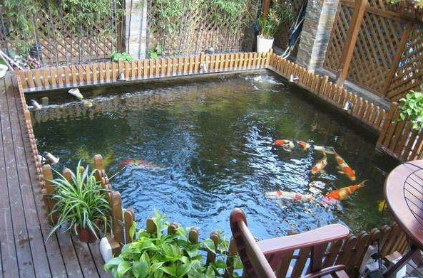 杭州锦鲤鱼池